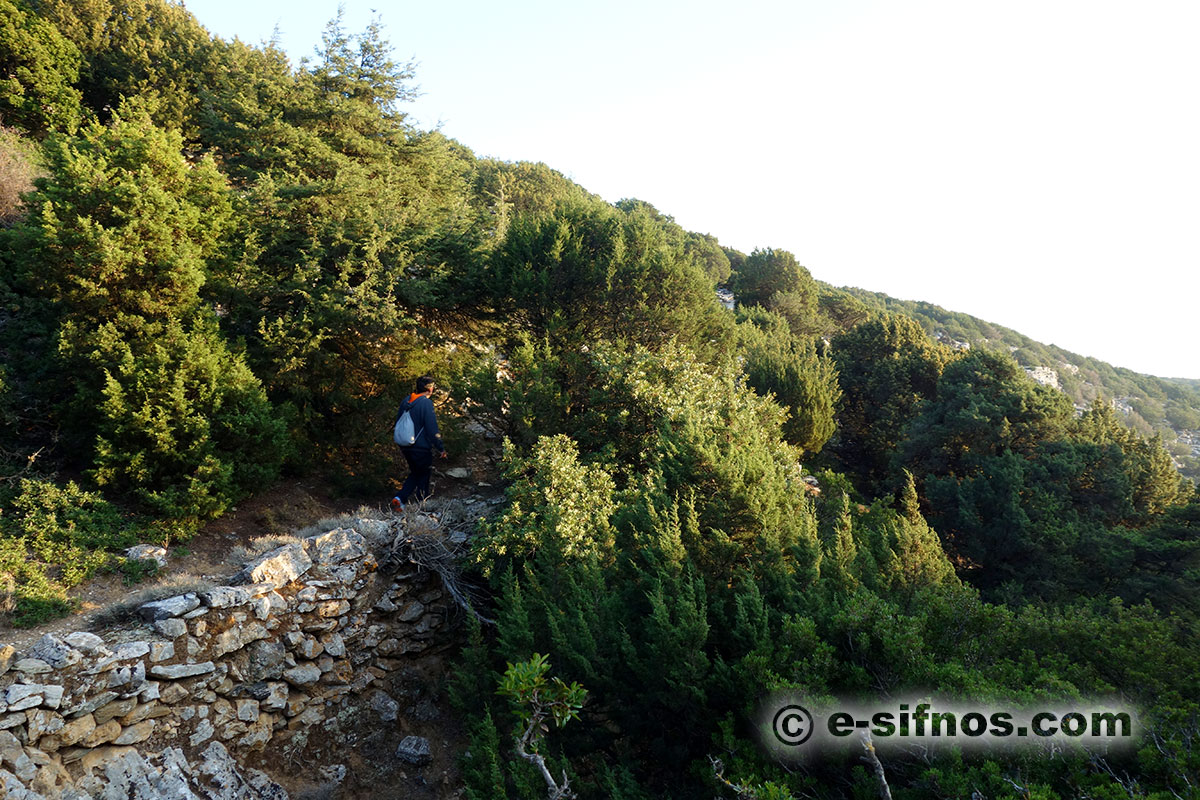 A trail in Natura area with junipers