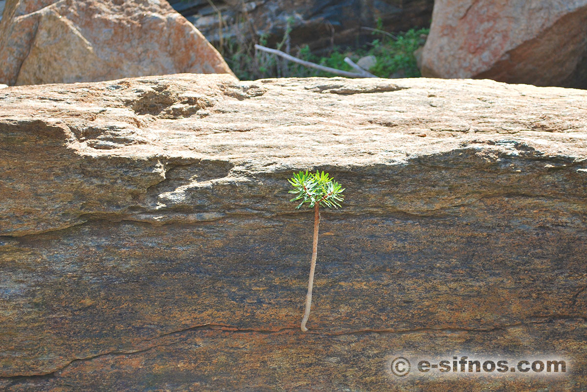 A bush plant comes out from a rock